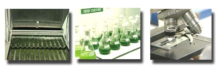 various spirulina pictures